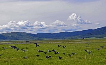 12-Cranes