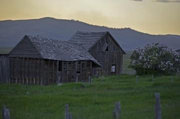 Cabin w Lilacs